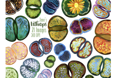 Watercolor Lithops Clipart