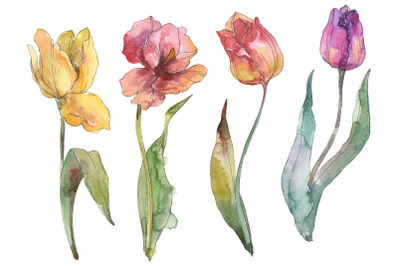 Assorted Tulips Watercolor Clipart, Floral Painting, Diy elements, Inv