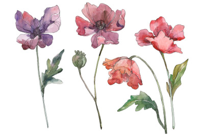 Watercolor Poppy Clipart, Floral Painting, Diy elements, Invitations,