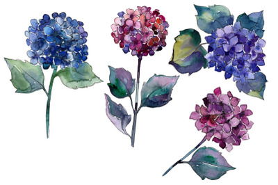 Purple Hydrangea Watercolor Set, Hand Painted Flowers, Free Commercial