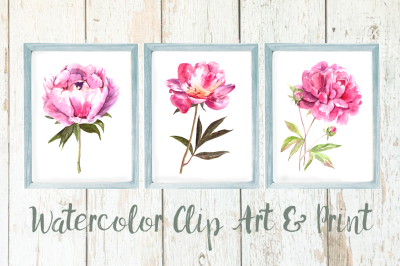 Watercolor Pink Peony Clip Art & Print