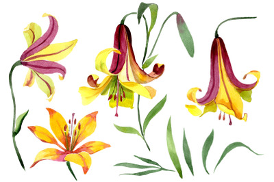 Yellow lily flower Watercolor png