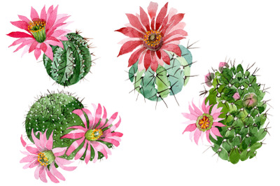 Cactus green spiny ordinary, flower watercolor png