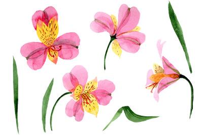 Astrometry pink flower watercolor png