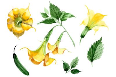 Brugmansia yellow flower watercolor png