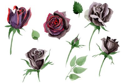 Black Rose flower Watercolor png