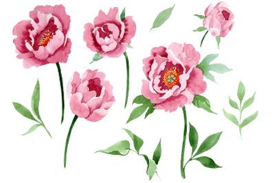 Dark red peony flower Watercolor png