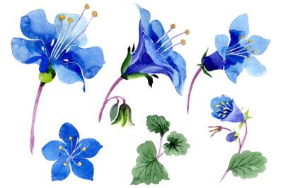 Phacelia bellflower blue flower Watercolor png