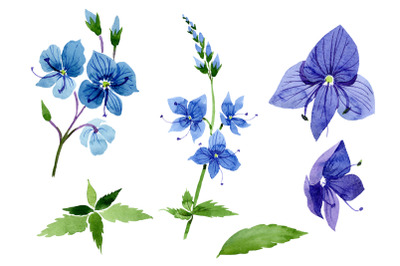 Veronica flower blue Watercolor png