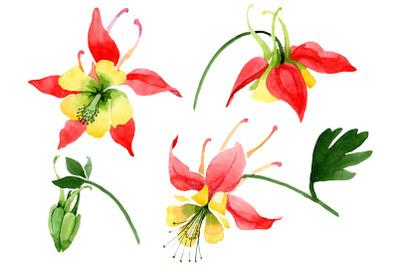 Red aquilegia flower watercolor png