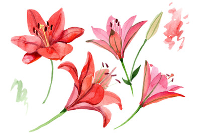 Red lily flower watercolor png