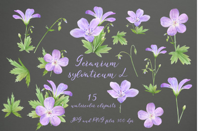 Watercolor Geranium. Set of illustration