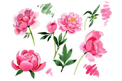 Raspberry red peonies flower watercolor png