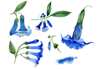 Brugmansia Blue flower Watercolor png