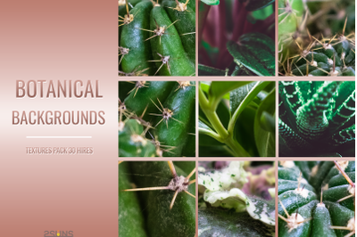 Botanical textures pack backgrounds cactus pylagronium violet aloe green photo overlays download textures natural nature printable photoshop