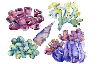 Sea flowers, corals magic watercolor png