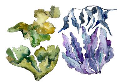 Coral sarcophiton watercolor png