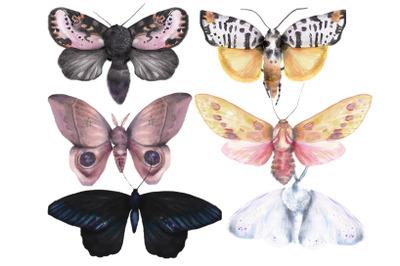6 beautiful unique vintage watercolor moths and butterflies set