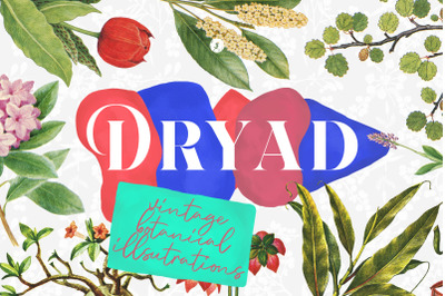 Dryad - Botanical Illustrations