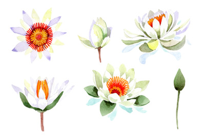 White lotus flower watercolor png