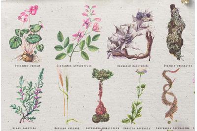 Vintage botanical retro floral plants and succulents set
