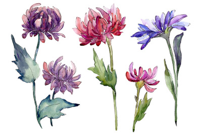 Bouquet of flowers aster Forest Fairy watercolor PNG
