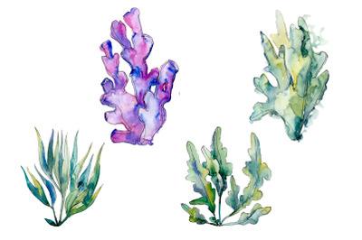 Coral acabaria watercolor png