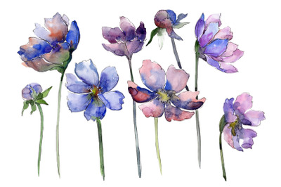 Cosmos flower blue Watercolor png