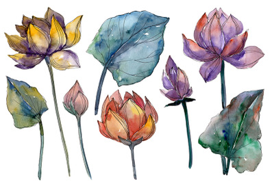 Lotus flower Watercolor png