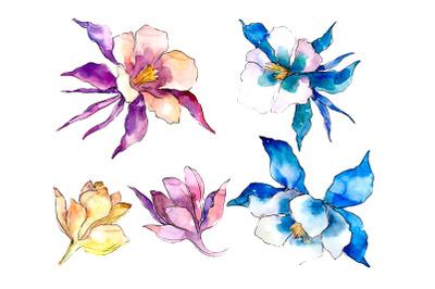 Flower aquilegia watercolor png
