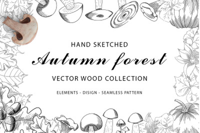 Autumn forest vector wood collection
