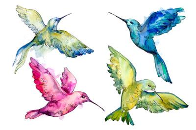 Colibri Small bird Watercolor png