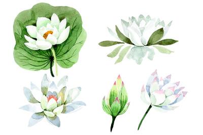 Flower White lotus Watercolor png