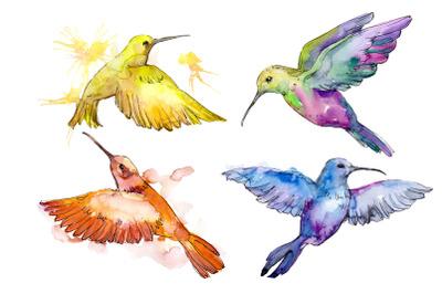 Nature world bird hummingbird watercolor png