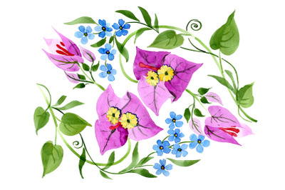 Ornament of Bougainvillea  pink Watercolor png