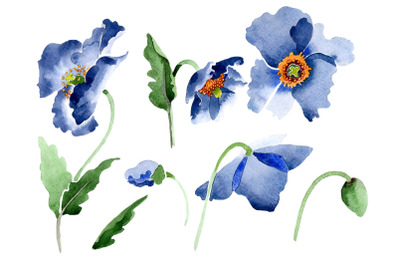 Blue poppy flower Watercolor png