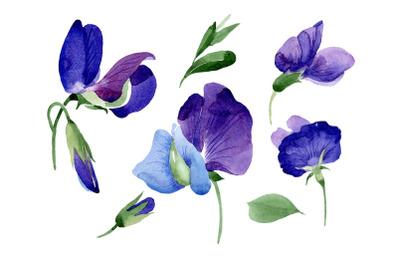 Purple sweet pea flower Watercolor png