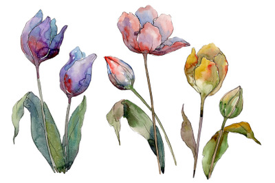 Tulips flower Watercolor png