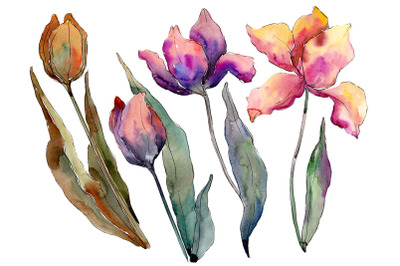 Bouquet of flowers from tulips Perfection watercolor png