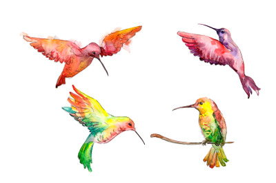 Hummingbird bird family watercolor png