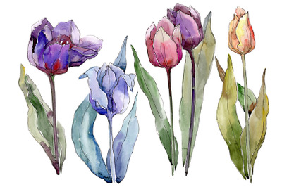 Flowers tulips cute compliment watercolor png