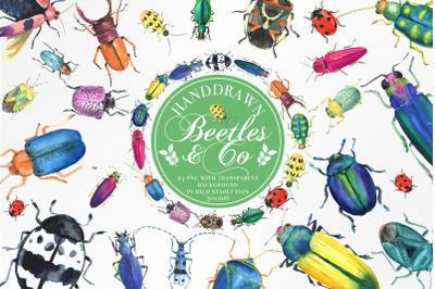 Handdrawn Watercolor Beetles & Co