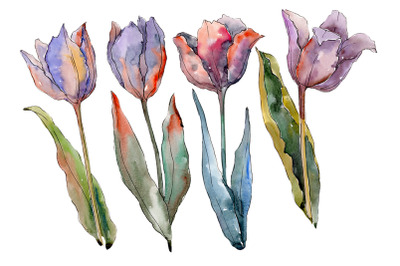 Flowers tulips fiery hello watercolor png