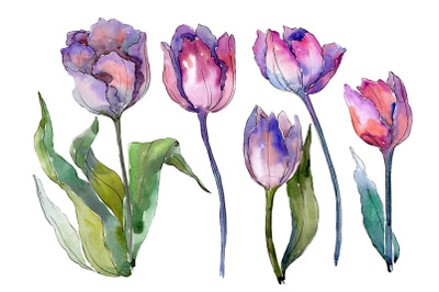 Bouquet with tulips Diodorus watercolor png