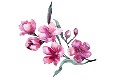 Bouquet of flowers Fiona pink watercolor png