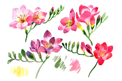 Pink Freesia flower Watercolor png