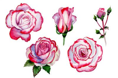 Pink rose good morning watercolor png
