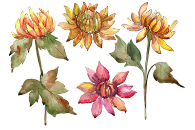 A mix of flowers from daisies and asters watercolor p