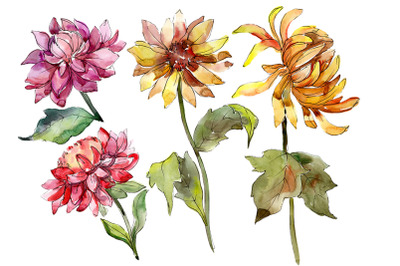 Bouquet of asters and daisies watercolor png