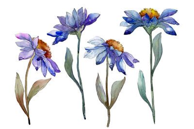 Bouquet blue of asters and daisies watercolor png